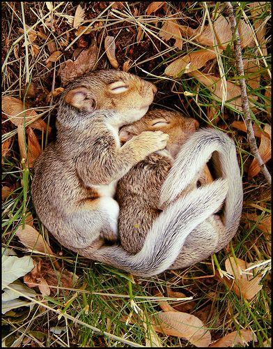 hibernate2.jpeg